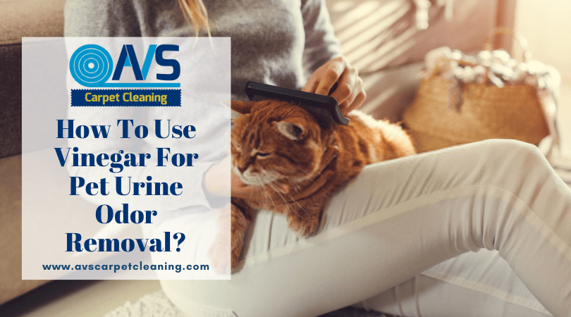How To Use Vinegar For Pet Urine Odor Removal?