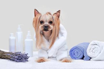 Pet Urine Odor Removal
