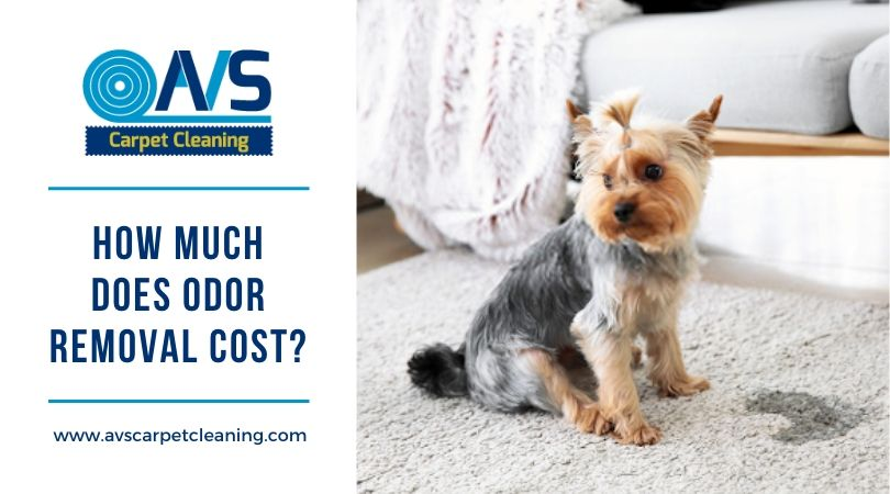 How much does odor removal cost