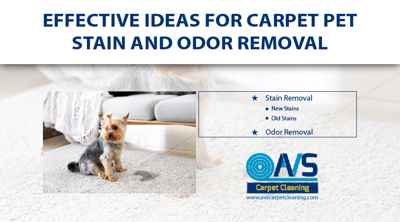 Effective Ideas for Carpet Pet Stain And Odor Removal